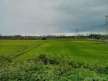 Hoi An - biking rice fields 3