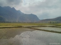 Mai Chau - rice fields 1
