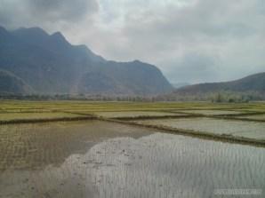 Mai Chau - rice fields 1
