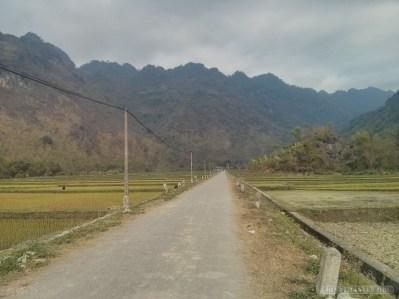 Mai Chau - rice fields 12