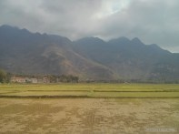 Mai Chau - rice fields 14