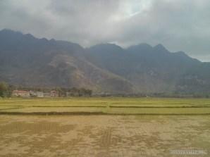 Mai Chau - rice fields 14
