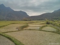 Mai Chau - rice fields 15