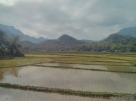 Mai Chau - rice fields 7