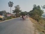 Mandalay - biking around Ayeyarwady river 3