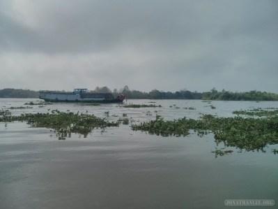Mekong boat tour - lotus plants