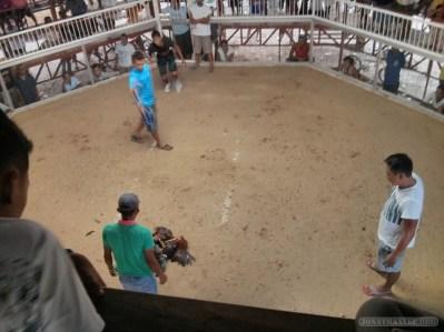 Moalboal - cockfighting 1