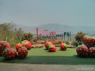 Pai - love strawberry 3