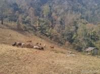 Pang Mapha - exploring scenery 3