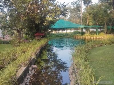 Pyin U Lwin - National Kandawgyi Gardens 15
