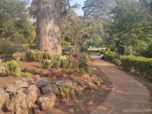Pyin U Lwin - National Kandawgyi Gardens 9