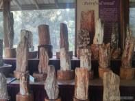 Pyin U Lwin - National Kandawgyi Gardens petrified wood museum 3