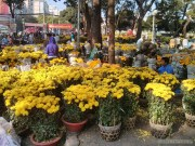 Saigon during Tet - flower market 2