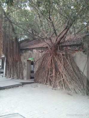 Tainan - tree house 3