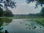 Yangon - Kandawgyi park 3