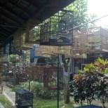 Yogyakarta - bird market 1