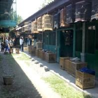 Yogyakarta - bird market 6