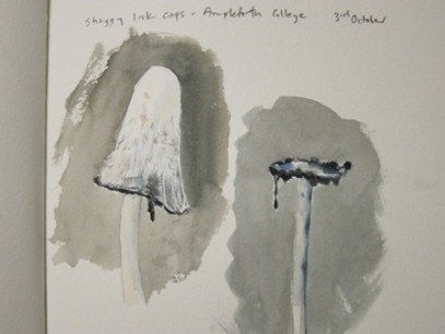 Shaggy Ink Cap- watercolour in sketchbook