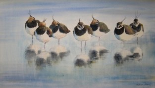 Resting Lapwings SOLD PRINT AVAILABLE