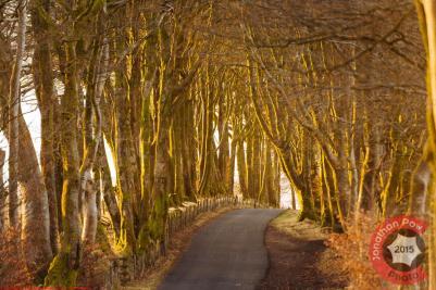 A beautiful sunlit tree lined road, Devon