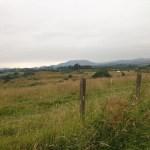 West Highland Way Day 2 – Drymen to Rowardennan (almost)