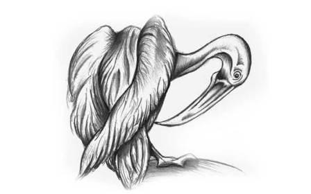 bird.jpg?fit=800%2C500&ssl=1