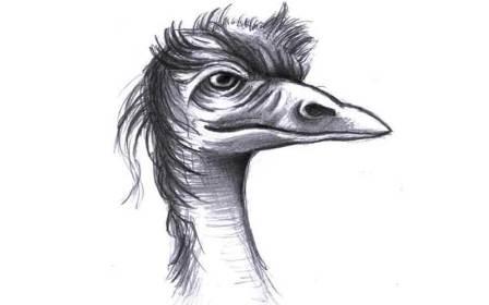 birdhead1.jpg?fit=800%2C500