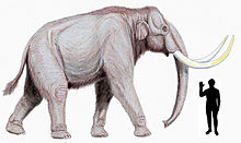 220px-Steppe_mammoth_size