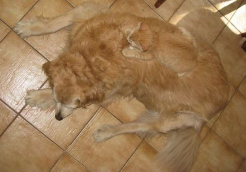 find the kitteh on dog