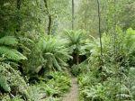 220px-Hellyer_Gorge,_Tasmania