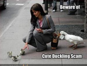 funny-pictures-beware-of-the-cute-duckling-scam