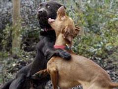 240-dogfighting