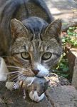 140px-Cat_and_mouse