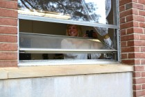 Mount Saint Joseph High School teacher Allison White is on the lookout for wildlife from her classroom's window.
