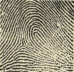 fingerprint (public domain)