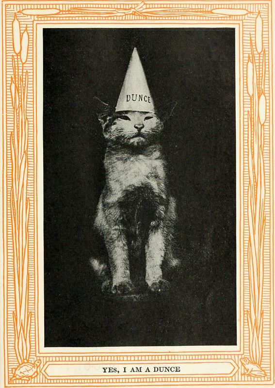Cat wearing dunce cap