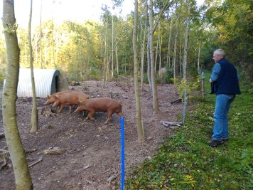 ... and the other pigs with Head Gardener, Dave