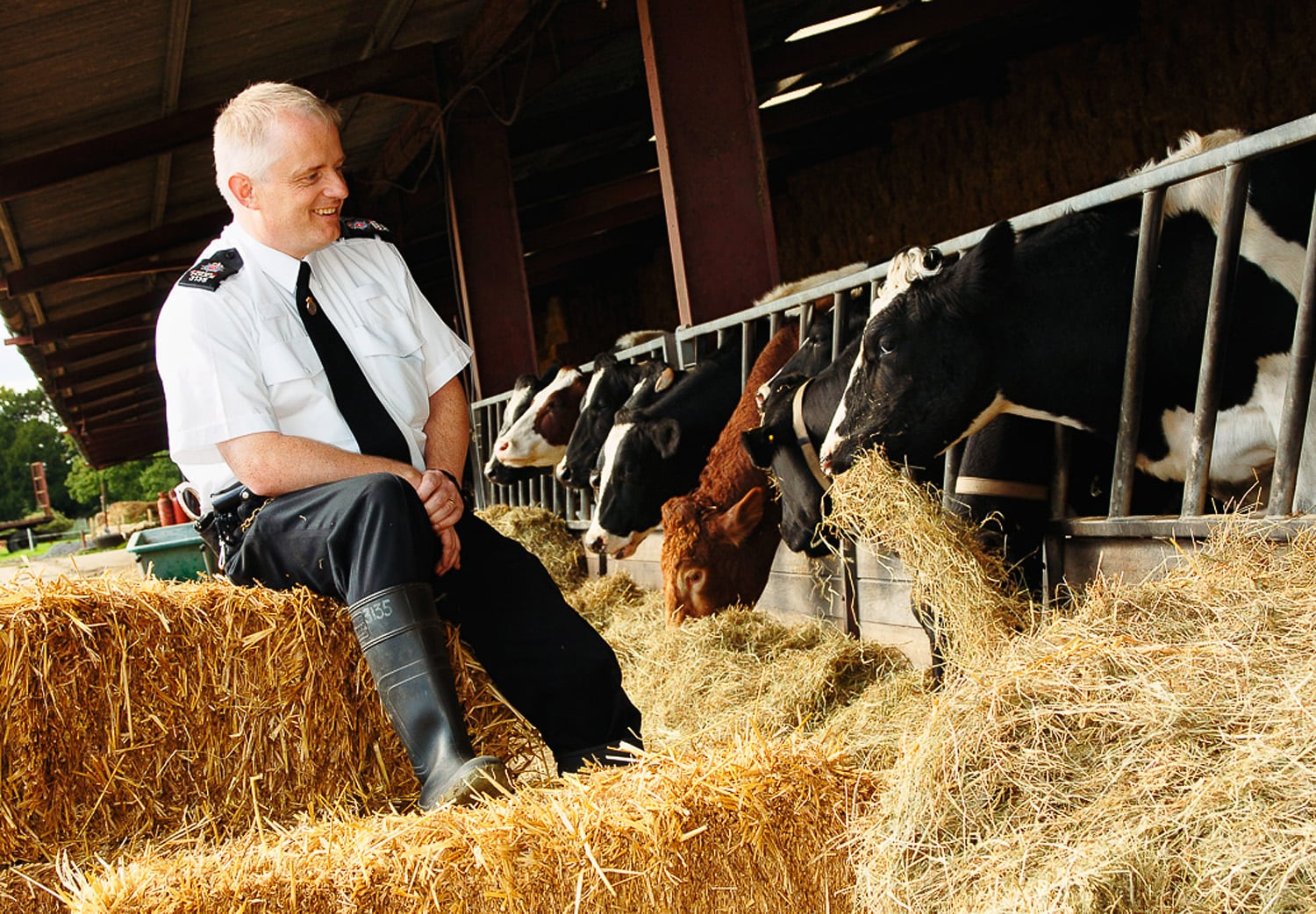 Police officer with cows, rural crime