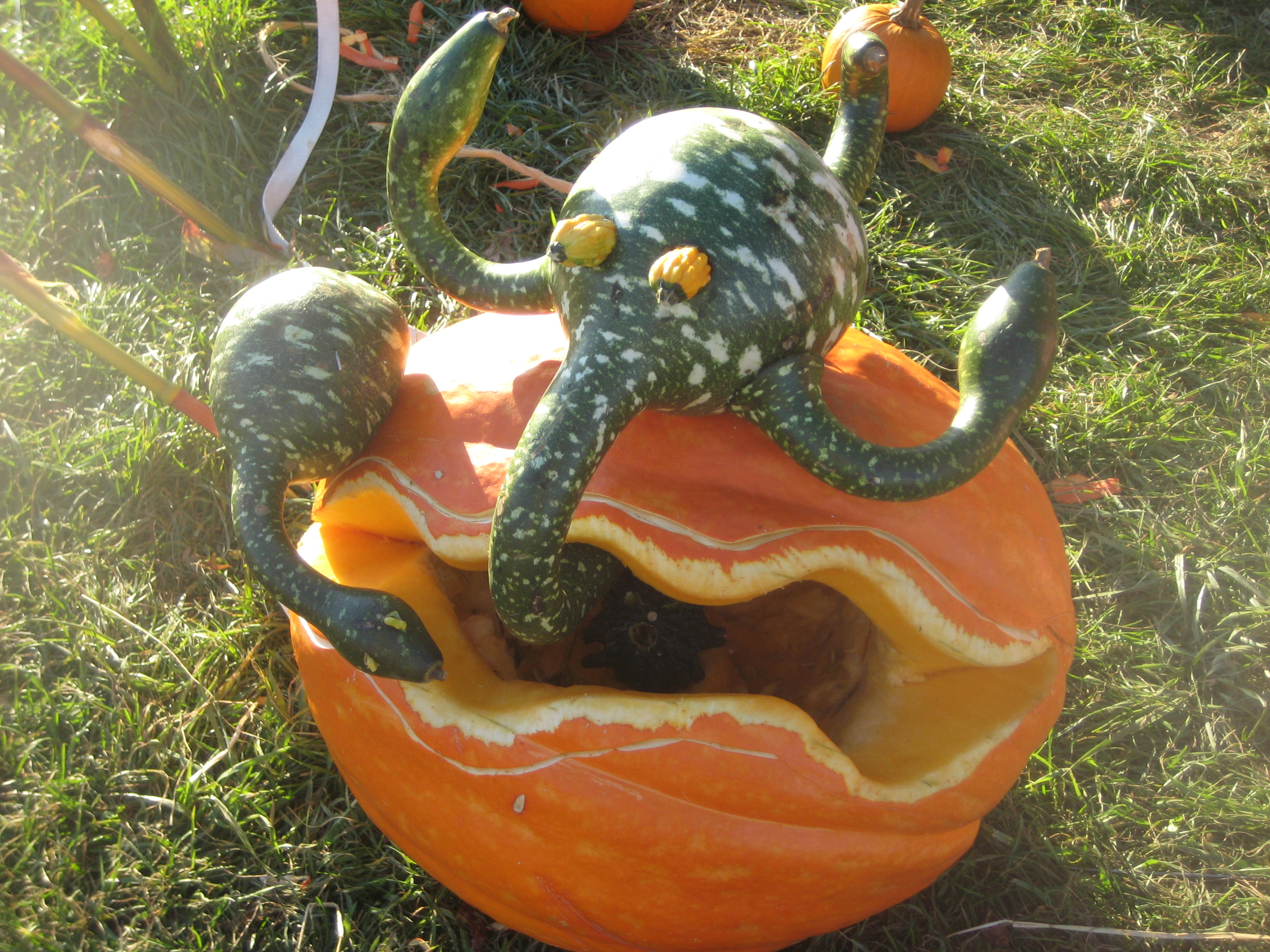Looking for Pumpkin Decorating Ideas  Jones Apprenti Blog