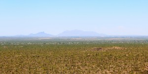 Saguaro Valley View