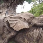 new disney animal kingdom carvings