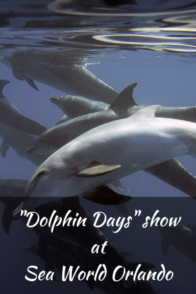 "SeaWorld Orlando Welcomes Spring with New Show ""Dolphin Days"""