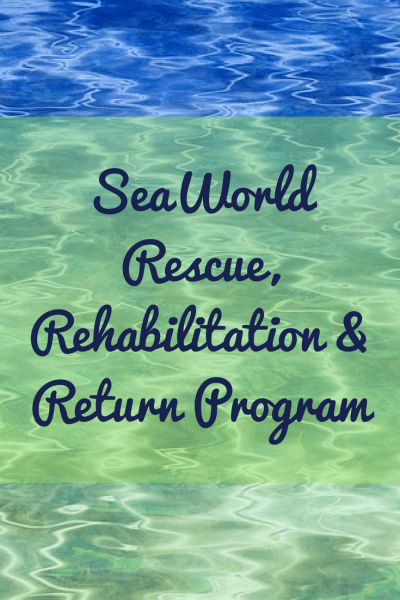 Find out more about two sea turtles that were recently returned to the ocean after rehabilitation by the SeaWorld Orlando Rescue Team.