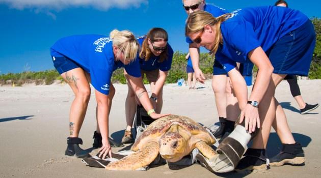 Sea Turtles Returned to Ocean by SeaWorld Orlando Rescue Team