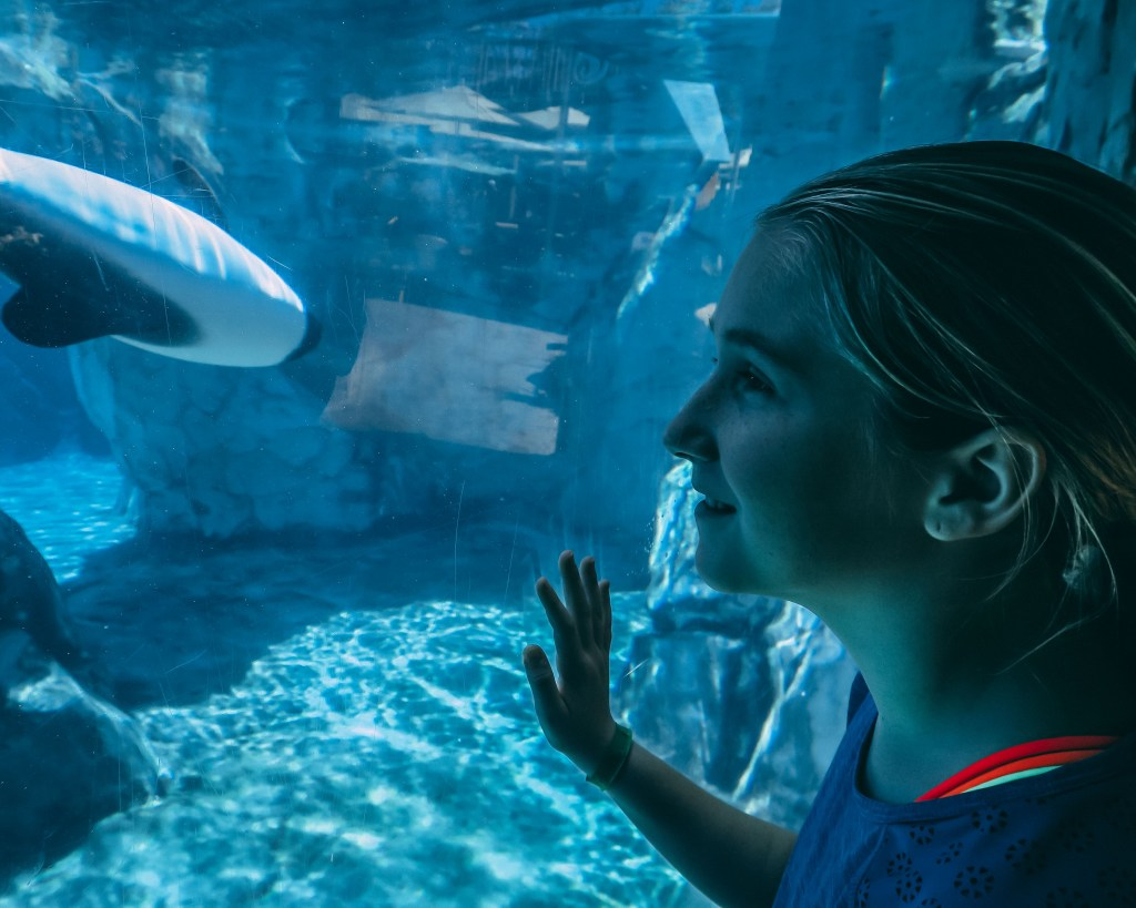 Enjoying the Commerson Dolphin at SeaWorld Aquatica Water Park