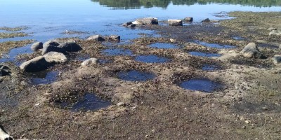 Fish nests left high and dry baking in the sun. Meanwhile in Brockton, MA someone is filling a swimming pool with this water. This has got to stop. – jonesriverecology