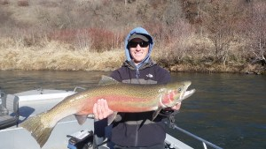 Large B Run Steelhead