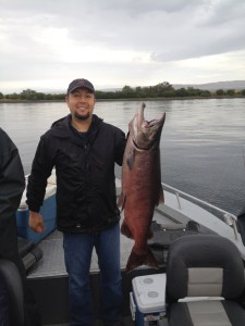 Hanford Reach Fall Chinook
