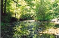 Jones Creek - Shadows