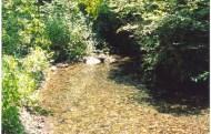 Jones Creek - Sun Light
